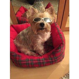 Autre Marque-Lunettes chien-Argenté